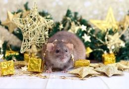 Приметы и суеверия на Новый 2020 год Крысы