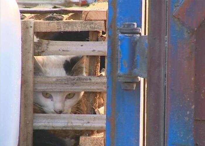 Активисты спасли 2 тысячи котов