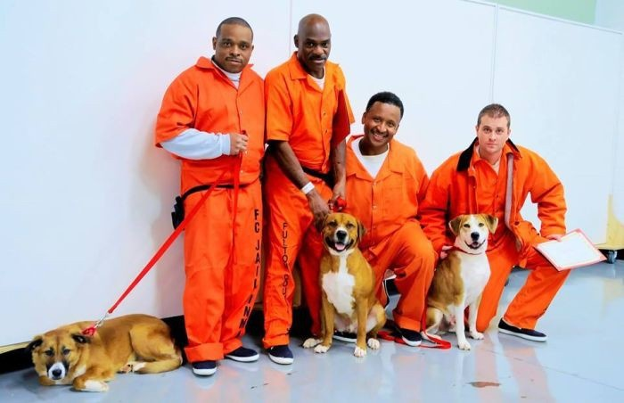 В одной из тюрем США заключенным разрешили брать на воспитание бездомных собак