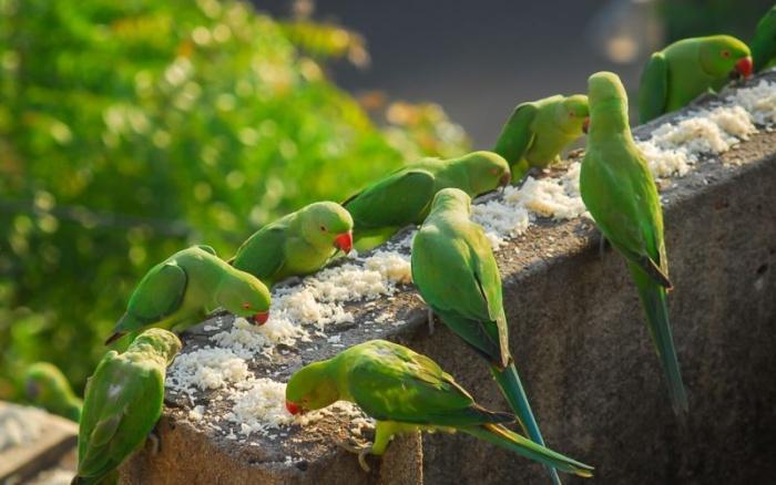 Любитель птичек кормит 4000 попугаев ежедневно
