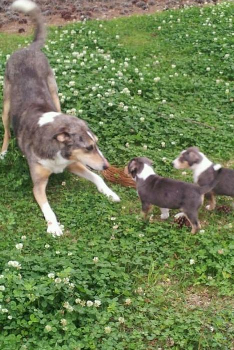 Ветеринар потратил сотню тысяч долларов на то, чтобы дважды клонировать свою любимую собаку