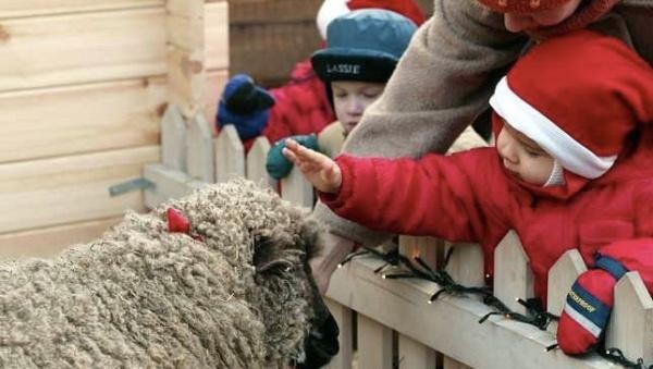 В Нарве пройдет благотворительный забег в помощь детским домам