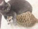 Сурикат и кот стали лучшими друзьями