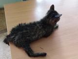 Российский дальнобойщик проехал 800 километров ради спасения котенка