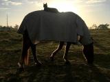История необыкновенной дружбы кота Морриса и коня Чемпи