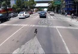 В Мехико храбрая велосипедистка устроила погоню по проезжей части за сорвавшейся с поводка собакой