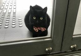 «Пустите, я войду»: пара японских котов уже три года пытаются попасть в музей