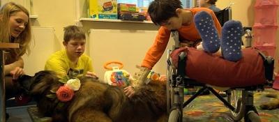 В Нарвской больнице станут работать терапевтические собаки