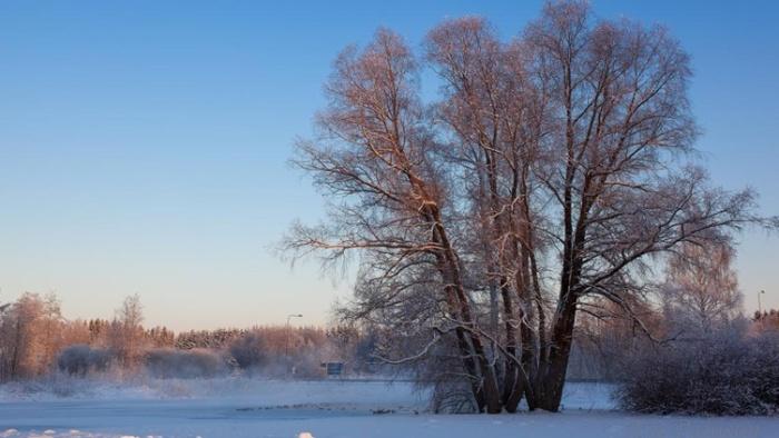 Синоптики обещают морозы и снег, но только в новом году