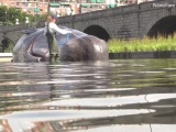 Выброшенный на берег городского пруда в центре Мадрида кит озадачил жителей