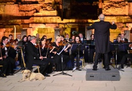 Четвероногий ценитель классической музыки затмил выступление оркестра своим появлением