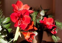 Рождественские растения могут быть опасны для маленьких детей