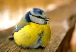 За прикормку птиц и животных в черте Таллинна МуПо может оштрафовать на 9600 евро