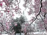 Соединенные Штаты на фотографиях Зака Левковича