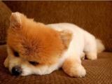Это щенок или игрушка?