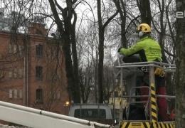Парк ДК Герасимова в Нарве приведут в порядок