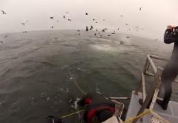 Дайверы и киты