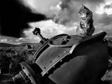 Просто хорошие фотографии котов