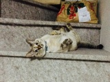 Этот бродячий котенок сам выбрал себе Человека и не дал ему уйти!