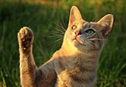 Суд Барнаула оправдал кота, обвиненного в краже электричества на 78 тысяч