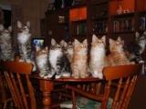 Классная кошачья подборочка