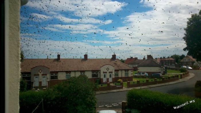 Пчелиное торнадо