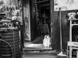 Кошки, которые живут там, где работают люди