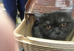 Кот-толстячок свалился с восьмого этажа и серьезно повредил стоящую под окнами машину