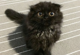 Вечно удивленный кот по кличке Гимо