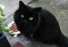 Кошка прожила в двигателе две недели. Хозяйка ездила как обычно, пока не открыла капот.