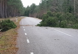 В Ида-Вирумаа шторм не добавил спасателям особой работы