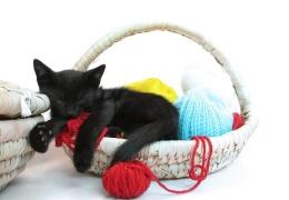 Почему кошки много спят?