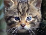 Природа нарисовала эти удивительные кошачьи окрасы