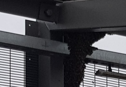 """Пчелы оккупировали приграничный мост """"Дружба"""""""