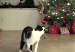 Коты и Елки! С Новым годом