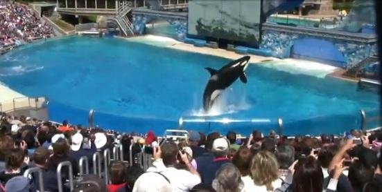 Шоу дельфинов-касаток в океанариуме