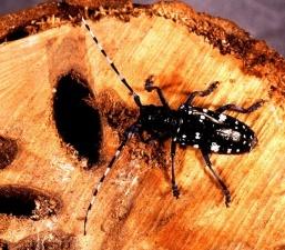 Эстония по требованию ЕС усилит контроль за деревянной тарой из Китая и Белоруссии