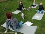 Постояльцам отеля в Британии предложили поучаствовать в занятиях йогой с лемурами