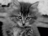 Фотоподборка Животные