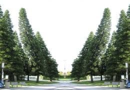 Загадочные деревья Кука