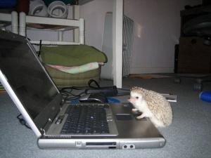 Читает новости про йожигов
