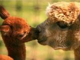 Мир животных: Вдвоем (23 фото)