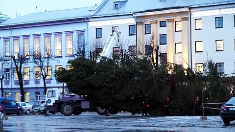 В Нарву привезли елку