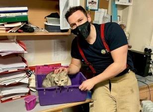 Пожарные спасли кошку, застрявшую в крошечной щели между двумя стенами
