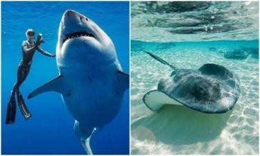 В океанах медленно исчезают акулы и скаты