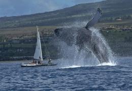 Гигантский кит выпрыгнул перед лодкой, чтобы предупредить людей