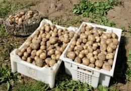 Эстонские фермеры с тревогой провожают лето: засуха приведет к подорожанию многих продуктов