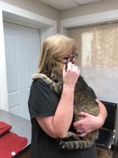 Кот-скиталец вернулся домой после 11 лет странствий