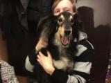 """Ученые выяснили, как организм собаки реагирует на фразу """"Я тебя люблю"""""""
