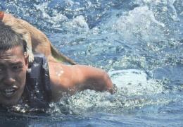 Экипаж тонущего судна, спасая свои жизни, бросил на борту кошек